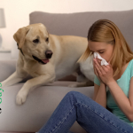 The Inside Outside Guys: We Are What we Absorb — Indoor Air