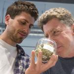 Michigan Marijuana Industry Valued at $3.2 Billion in 2020