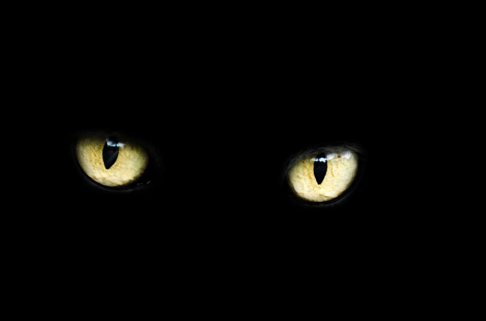 Are You Afraid Of Black Kats? This May Be Why…