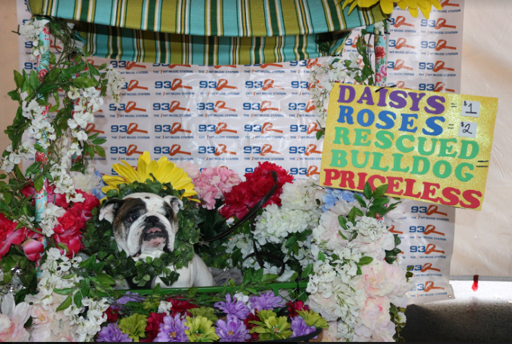 [Photo Gallery] Ted & Amy's 93Q Pet Costume Contest 2018