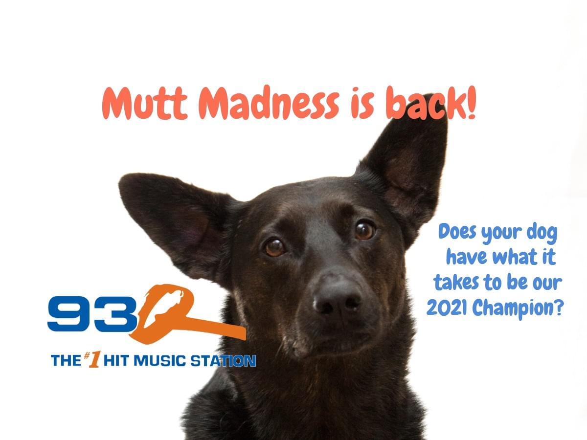 93Q Mutt Madness | CONTEST