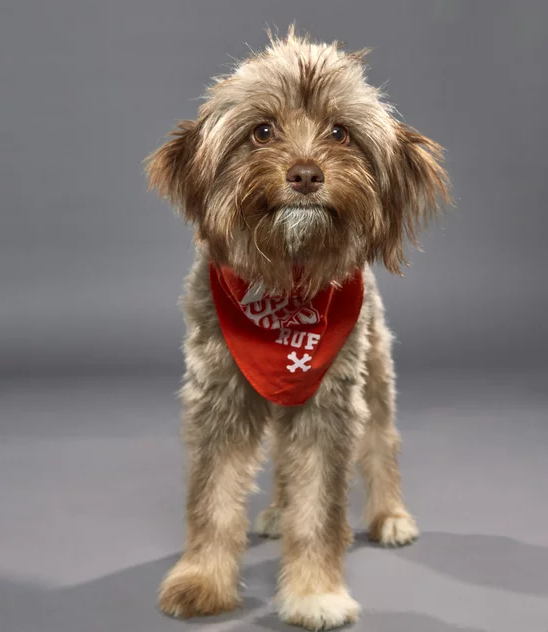 Katy puppies to play in Puppy Bowl this weekend