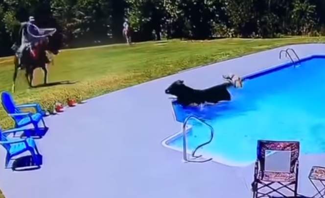 WATCH: A Cowboy Saves A Cow From Drowning