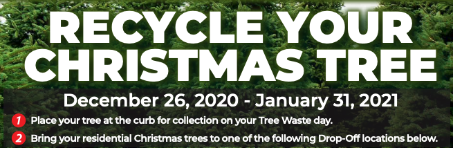 How to recycle your Christmas tree in Houston