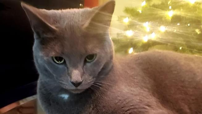 Keep Your Pet In Mind While Making New Year's Resolutions