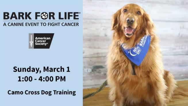 Bark For Life – A Canine Event to Fight Cancer