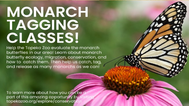 Monarch Exhibit Coming To Topeka Zoo