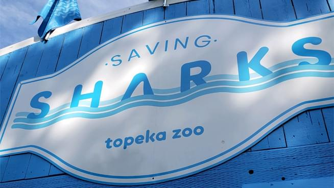Here's A Sneak Peak At The New Shark Exhibit At The Topeka Zoo