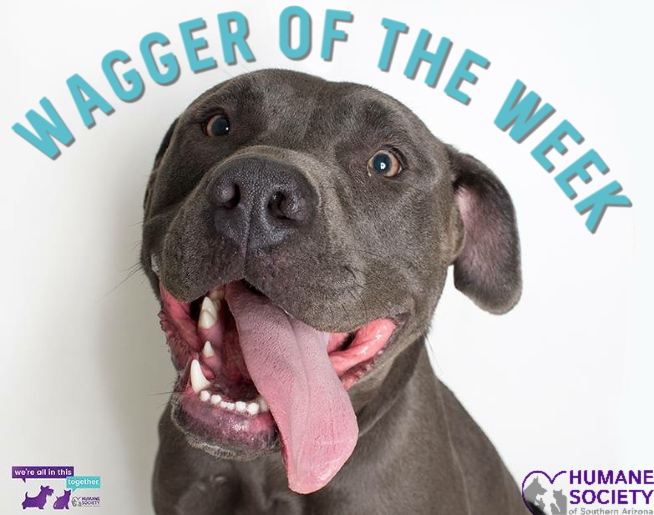 Wagger of the Week