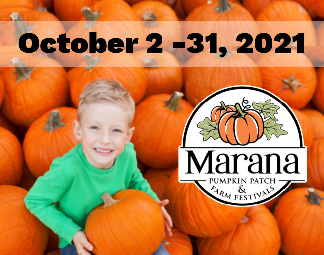 Marana Pumpkin Patch
