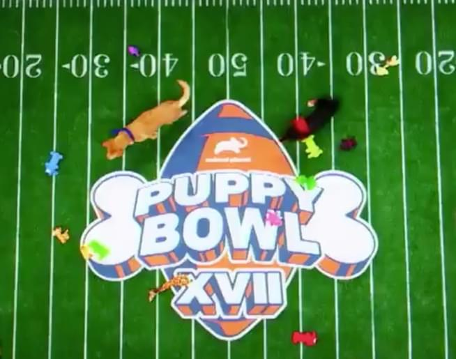 Jen & Frankchat with Dan Schachnerwho is the Ruff-fur-ree for the 17th Annual puppy Bowl!