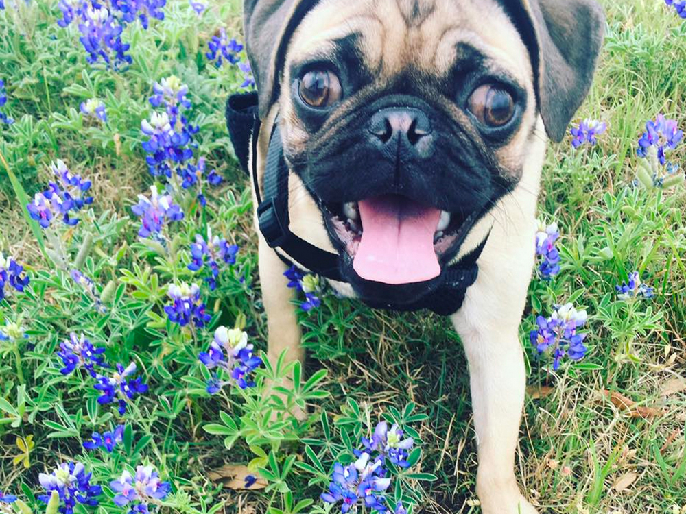 Ugg! Pat Green Needs Your Help Finding His Missing Pug