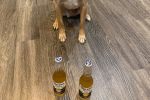 2 Beers And A Puppy Determine Who You Can Trust