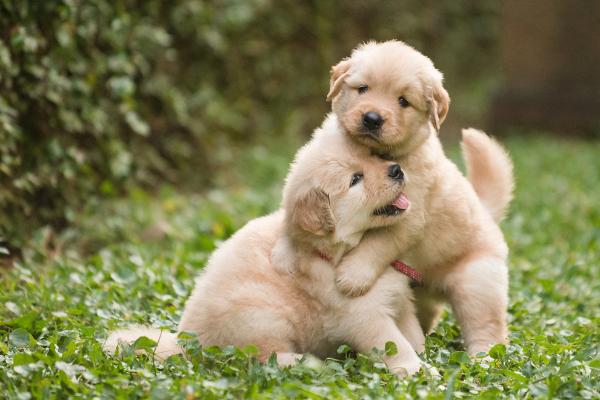 Man Blames Farts on Dog Woman Spends Big on Vet Bills