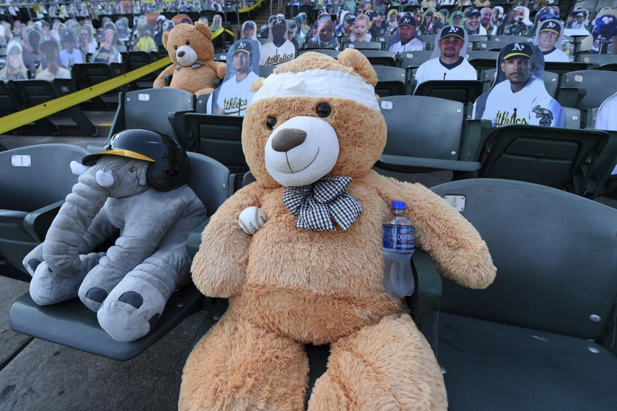 WATCH: Innocent teddy bear suffers horrific head injury at MLB game