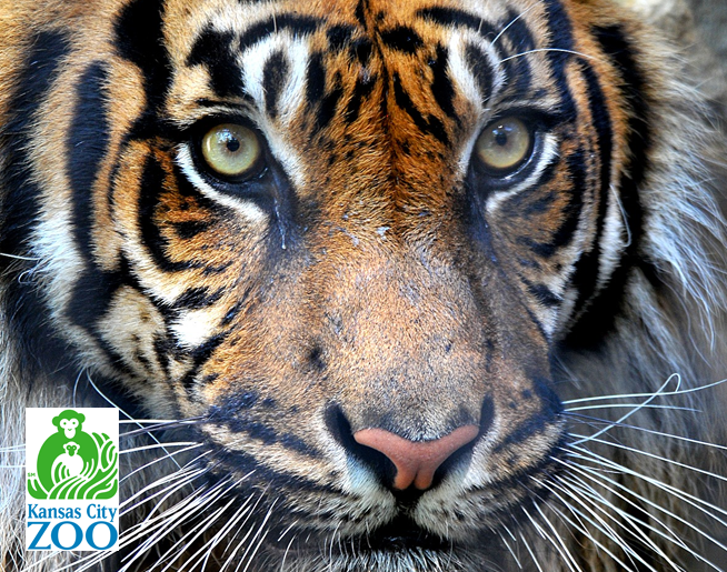 Help Feed the Animals at the KC Zoo