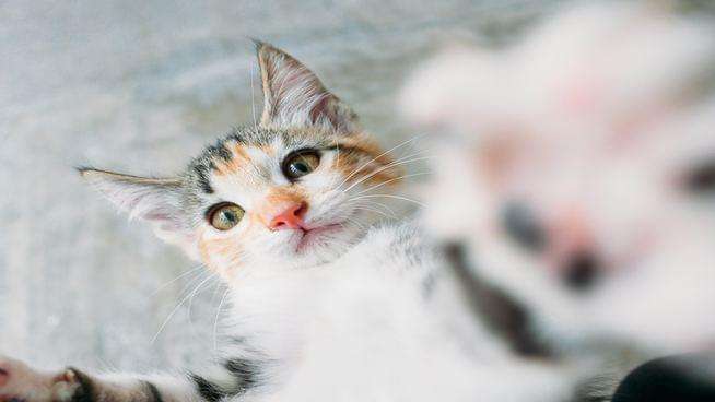 Researches Develop Vaccine For Cats So You Won't Be Allergic To Them