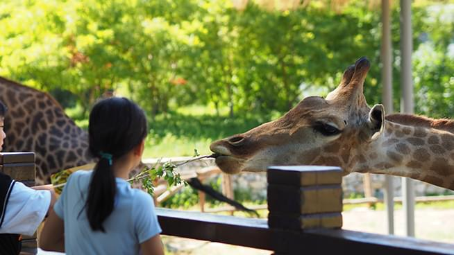 Outdoor Dining, Oakland Zoo Reopen in Alameda County After State Approves Variance