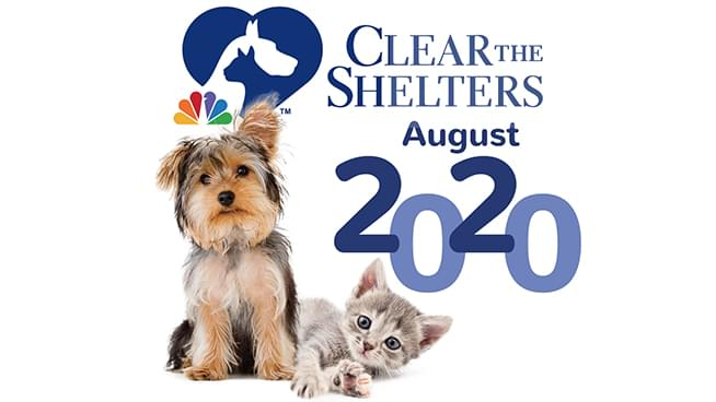 August 1 – 31, 2020: Clear The Shelters