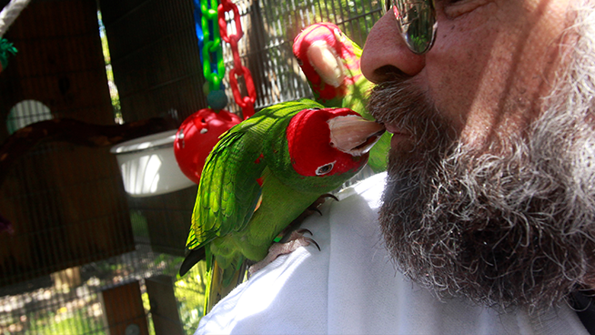 SF's Parrot Population Back in the Spotlight