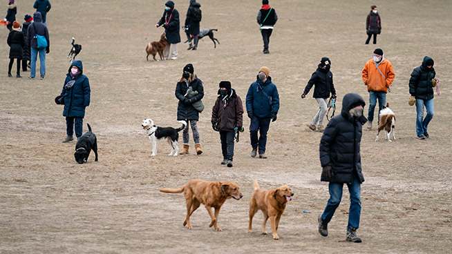'Pandemic Pets' Abandoned as People Return to Work