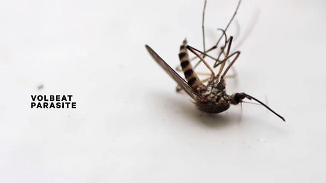 Volbeat Release New Single, Parasite