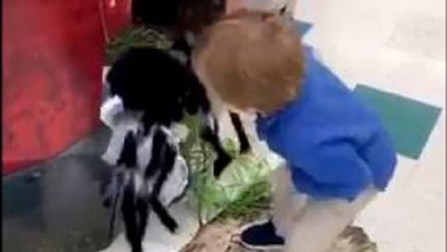 Little Kid Beats Up Halloween Spider