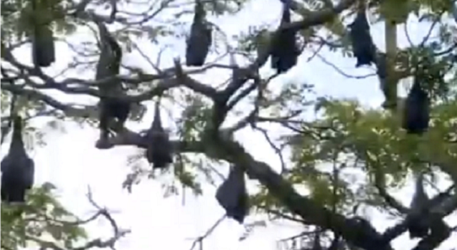 The Bats Are Taking Over