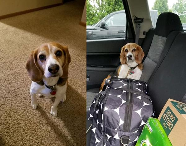 Listener Dan and Missy's pup Cooper. Sadly Cooper passed away a few weeks ago