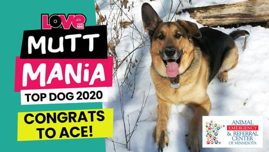 Congrats to Ace, Mutt Mania 'Top Dog' of 2020!