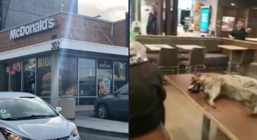 VIDEO: Homeless Man Brings Dead Raccoon Into McDonald's