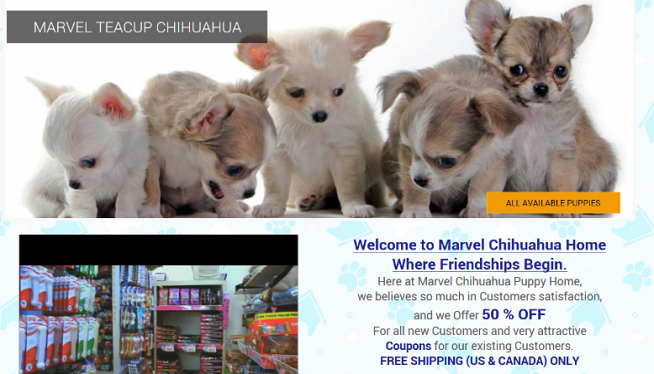 Purebred Puppy Scams Target Virginians Wmal Fm
