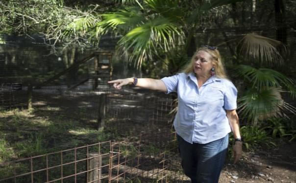 Judge Gives Control Of Joe Exotic's Zoo To Carole Baskin