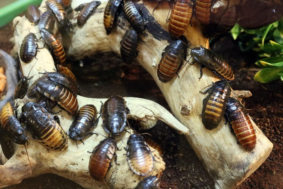 You can name a cockroach for your valentine at the Bronx Zoo