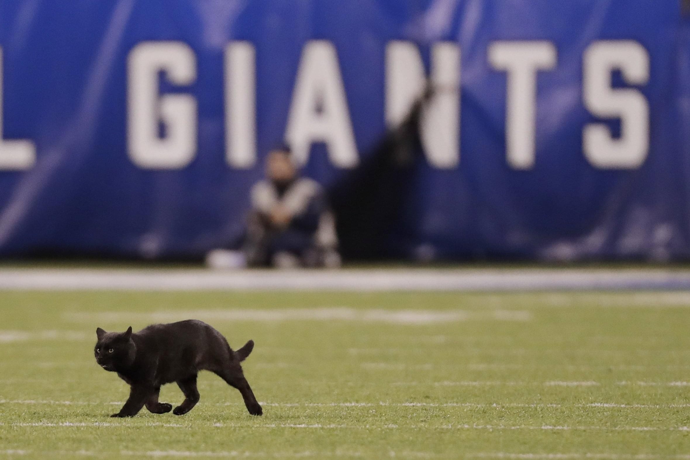 KLIF Morning News: More McKinney Racial Drama, and the Cat that Saved the Cowboys