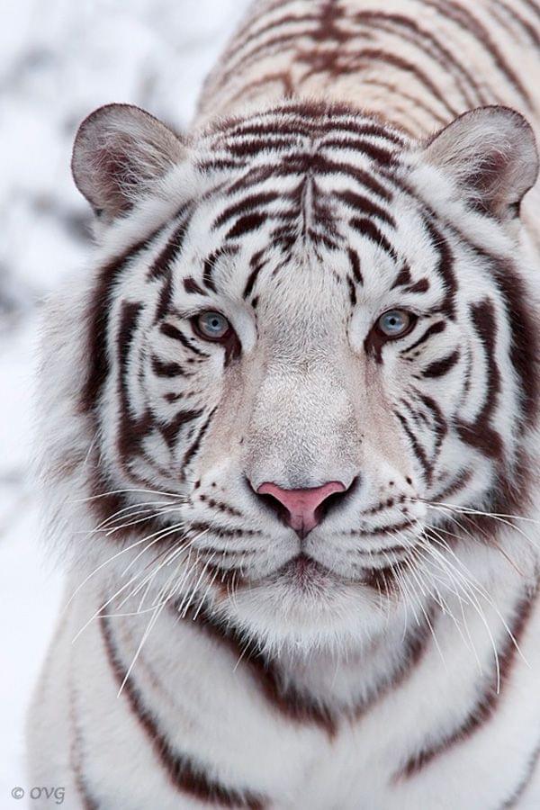 Narcotics raid finds exotic animals