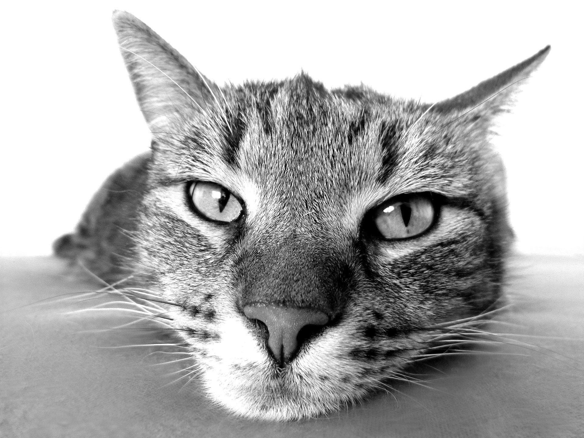 Cat Licks Vacuum Hose – It's CUTE AF!!!!