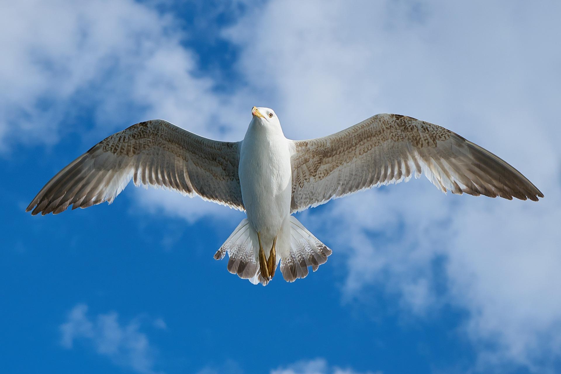 VIRAL: Seagull Slams Into Teen On Amusement Ride