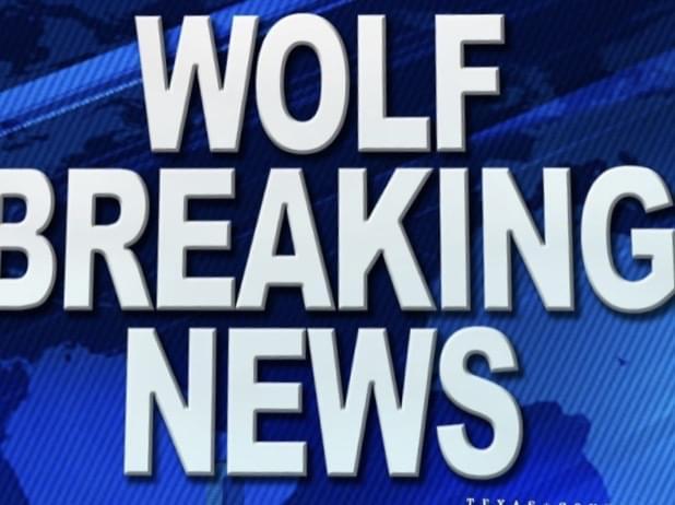 wolfBreakingNEWS