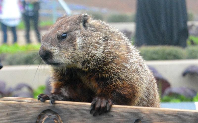 Spend Groundhog Day with Arboretum Annie