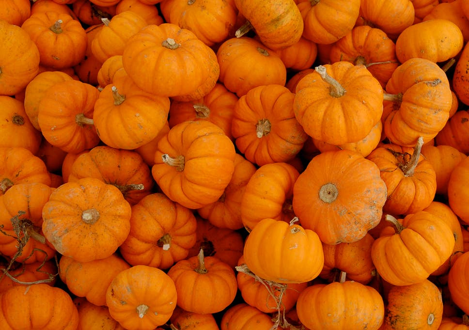 Check Out These Pumpkin Patches In DFW