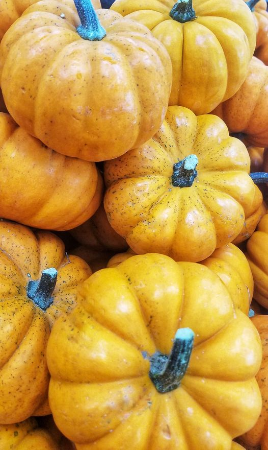 The Fort Worth Zoo Is Bringing The Pumpkin SPICE