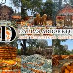 Autumn at the Arboretum – Listen to Win!