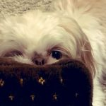 Country Music Stars Share Their Pup Pics on National Puppy Day