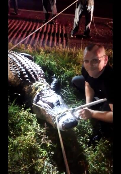 Nearly 12-Foot Alligator Spotted Crossing US 59 Near a Whataburger in Southeast Texas