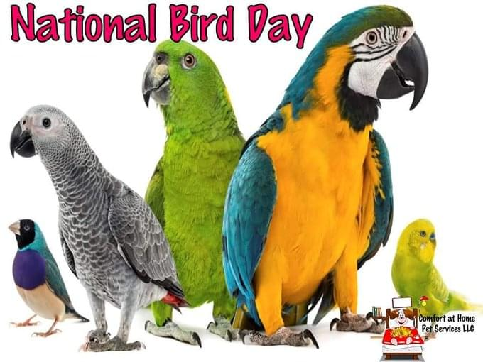 Today Is National Bird Day!