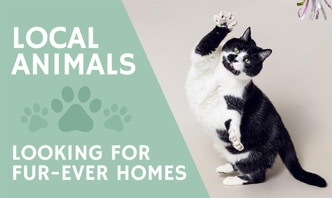 Adorable Animals Up For Adoption in RI Right Now
