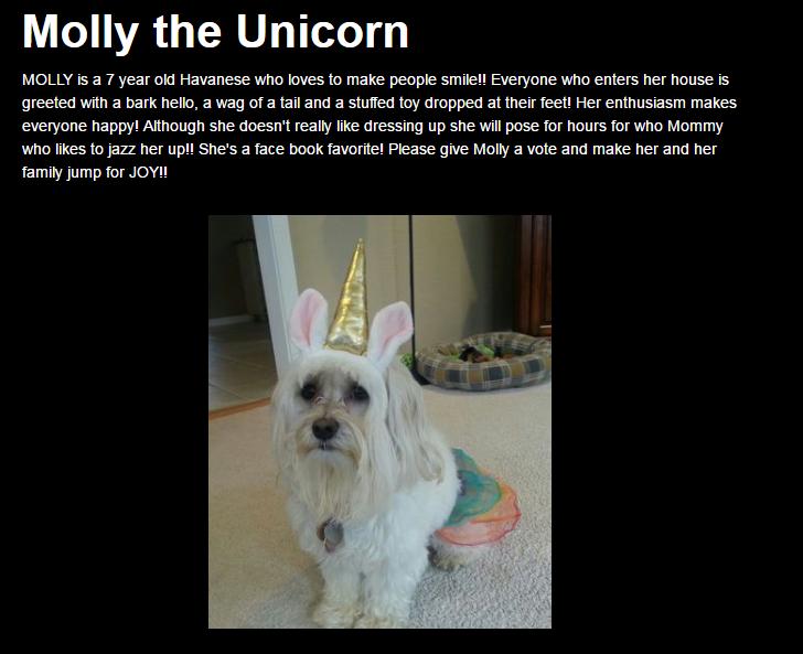 HOWL-O-Ween Pet Costume Contest Winner