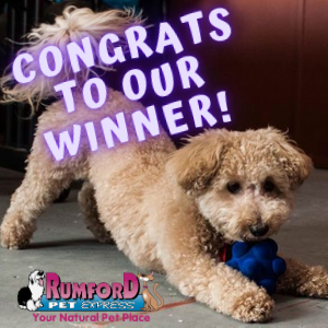 Dog Days of Summer   And the Winner Is…