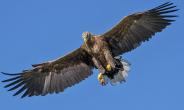 World Center for Birds of Prey set to expand